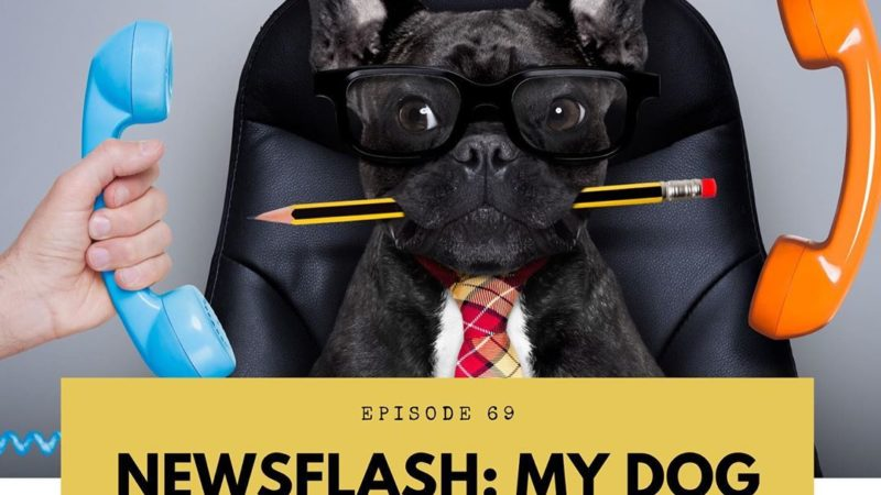 All Gold Everything | Episode 69: Newsflash – My Dog is a Jerk!